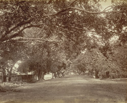 Mowbray Road, Madras